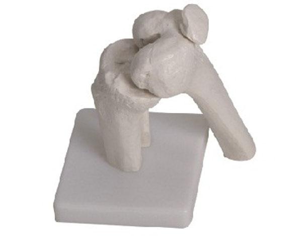 admin 发布于 2013-06-21 17:08 被浏览了 1047 次 上海驿佳公司专业生产膝关节模型,根据人体的解剖结构,采用PVC材料精心仿制而成,膝关节模型广泛适用于社大专院校、医院、医学院、卫校等医疗单位进行教学的理想模型,因其实用性强,造型逼真,受到广大用户的好评,欢迎订购:电话:021-63283651。 膝关节模型 型号:YJ/G0057价格:150元