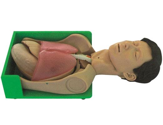 透明洗胃、胃肠减压仿真标准化病人,仿真训练模具